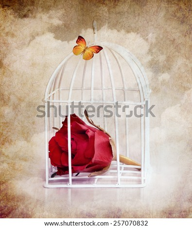 Prisoner rose and butterfly,vintage style to holiday card - stock photo