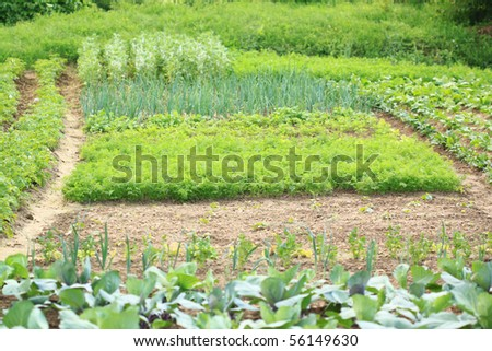 Private vegetable garden with various edible plants growing on beds - stock photo