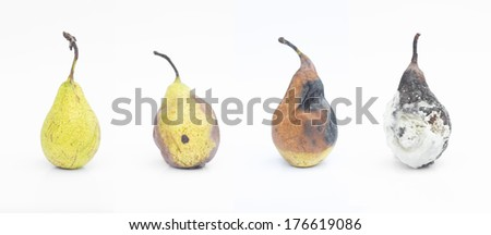 Process of rotting pears - stock photo