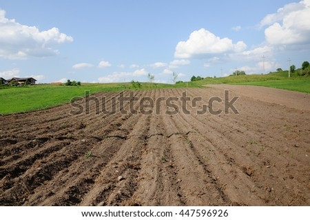 processed small agricultural field near the village