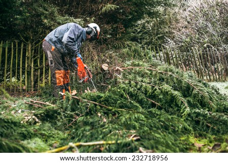 Professional gardener cutting tree with chainsaw. - stock photo