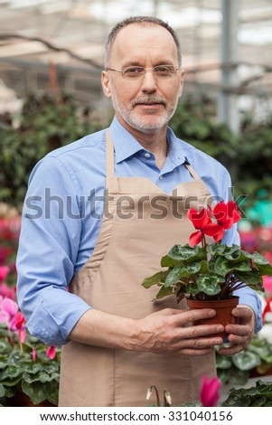 Professional old gardener is working in greenhouse. He is standing and holding flowerpot. The man in apron is smiling and looking at camera - stock photo