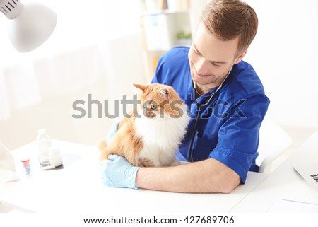 Professional young vet is doing examination of pet - stock photo
