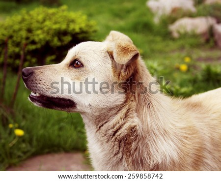 Profile dog on a background of green grass - stock photo