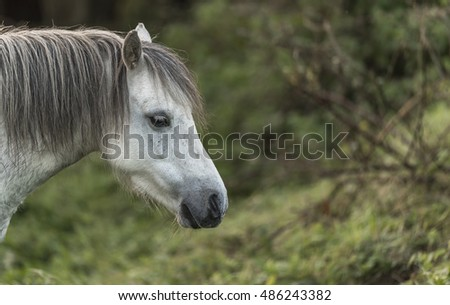 Profile of a grey/white horse, with a mane, against a rural background of foliage - excellent detail