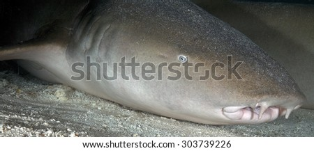 PROFILE OF A NURSE SHARK IN AN UNDERWATER CAVE - stock photo