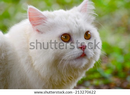 Profile of cat - stock photo