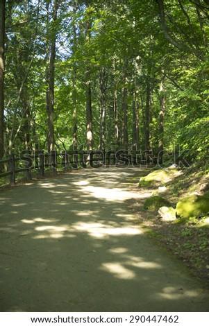 Promenade of forest - stock photo