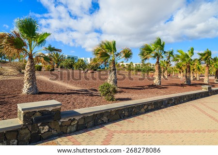 Promenade with palm trees on coast of Fuerteventura island in Las Playitas town, Spain - stock photo