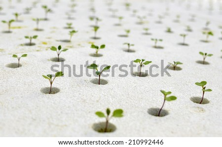 Propagation of plant sprout in white pot. - stock photo