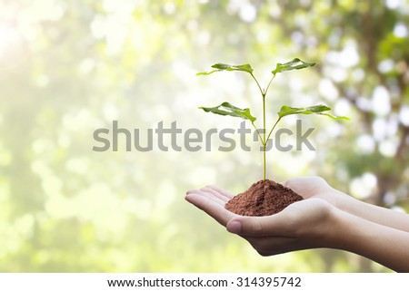 Protecting the forest,Plant a tree:Trees in hands with nature abstract background.Ecology concept  - stock photo