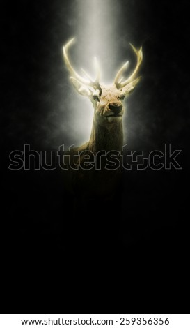 Proud stag illuminated in a beam of light shining down from the heavens through the darkness illuminating its head and antlers - stock photo