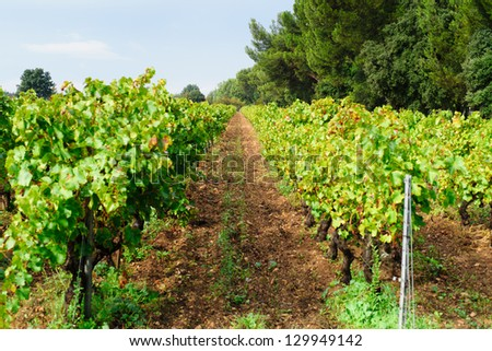 provecale vineyards provence france french wine growing