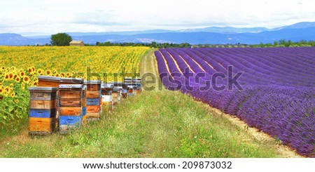Provence, France - fields of lavader and sunflowers with beehive - stock photo