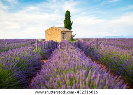 Provence, Valensole Plateau, lavender fields full of purple flowers.