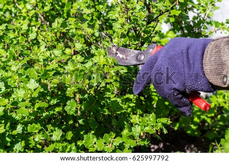Prune Stock Images Royalty Free Images Amp Vectors