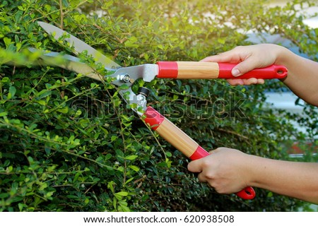 Pruning ornamental trees by scissors stock photo download now pruning of ornamental trees by scissors workwithnaturefo