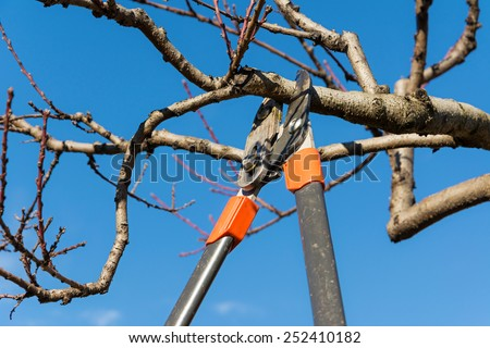 pruning tree - stock photo
