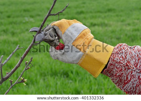 Pruning tree in orchard, closeup of hand and tool