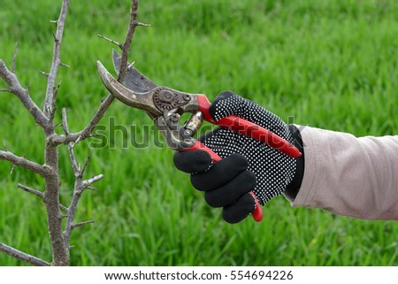 Pruning tree in orchard, selective focus on hand