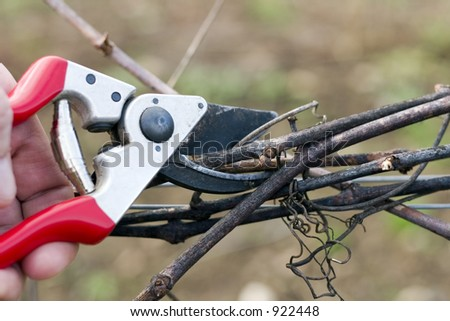 Pruning wine grape vines in the winter - stock photo