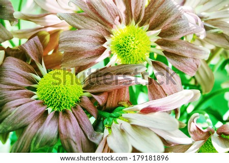 psychedelic flowers - weird tones  - stock photo