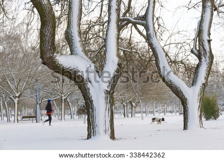 Public park in winter with snow, with two large trees in the foreground. Woman with dog playing sports