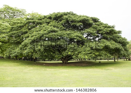Public park with mature trees and lots of green open space - stock photo