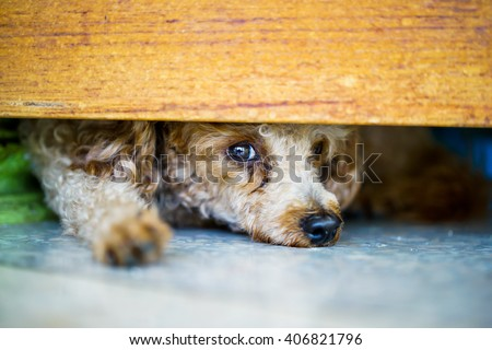 puddle dog is hiding and watching out