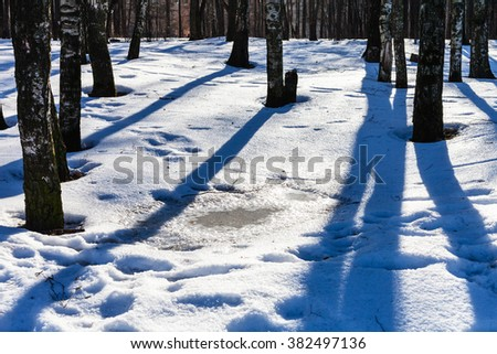 puddle from melting snow in birch grove in sunny winter day - stock photo