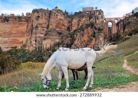 Puente Nuevo bridge and horses. Ronda. Spain - stock photo