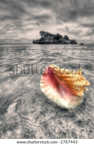 Puerto Plata - Caribbean - sea shell - sepia - stock photo