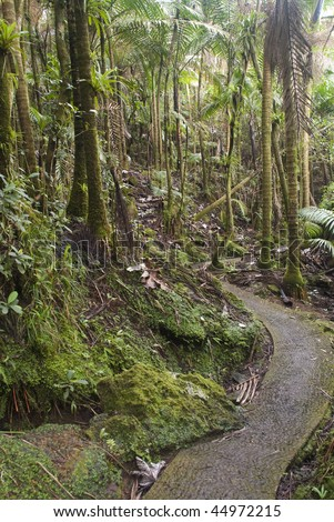 Puerto Rico. Caribbean National Forest El Yunque. Tropical rain forest. - stock photo