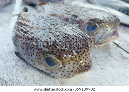 Puffer fish on market display. - stock photo