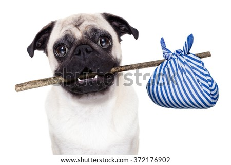 pug dog abandoned and left all alone on the road or street, with luggage bag  , begging to come home to owners, - stock photo