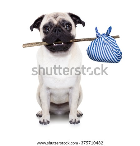 pug dog with bag - stock photo