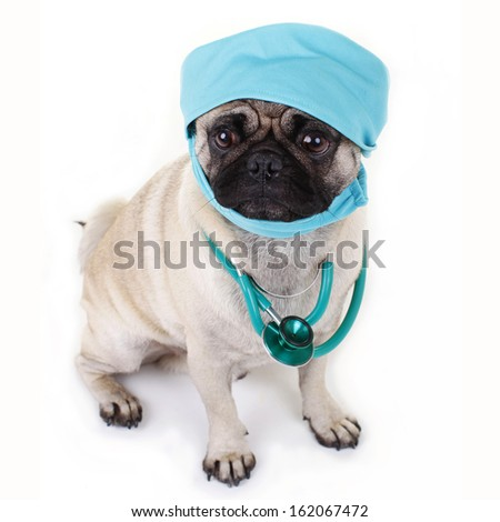 Pug dog with stethoscope  - stock photo