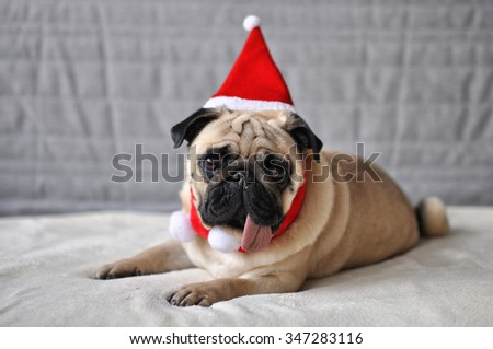 pug in a santa hat - stock photo