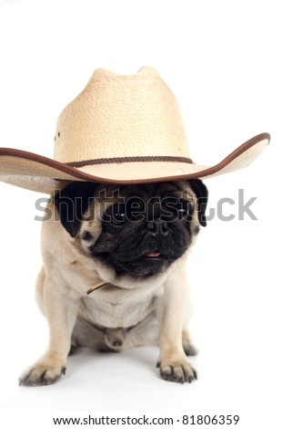 pug in hat on white background - stock photo
