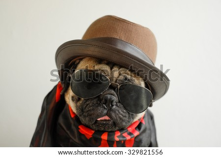 Pug in  rock band costume. - stock photo