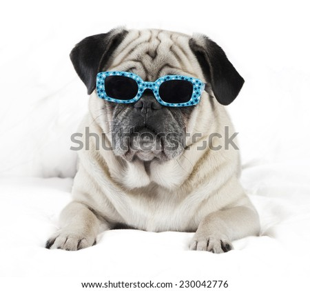 Pug male dog with sunglasses lying on a white blanket - stock photo