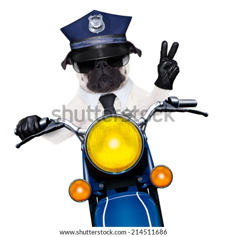 pug police dog on motorbike patrolling the street with peace or victory fingers wearing cool sunglasses isolated on white background - stock photo