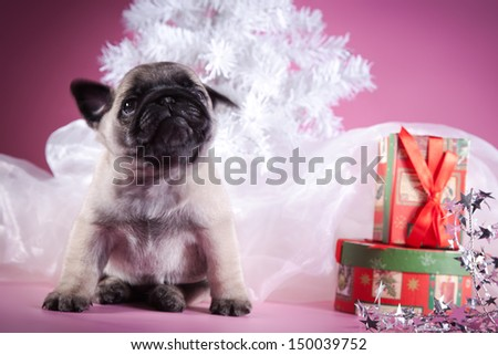 pug puppy dog, Christmas and New Year - stock photo