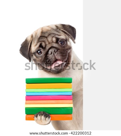Pug puppy holding books and peeking from behind empty board. isolated on white background