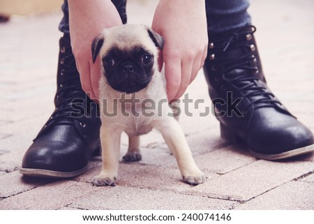 pug puppy outside shoes - stock photo