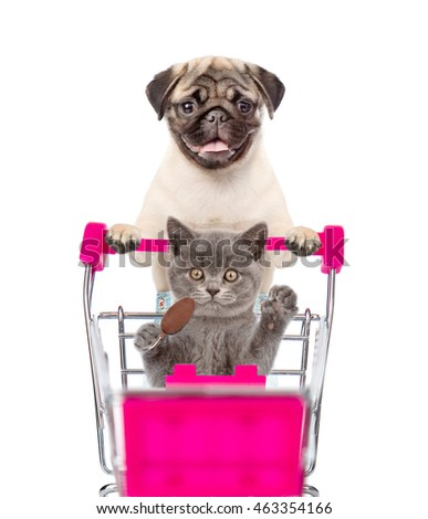 Pug puppy pushing a shopping cart, in which a cat sitting. isolated on white background