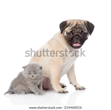 Pug puppy sitting with newborn kitten. isolated on white background - stock photo