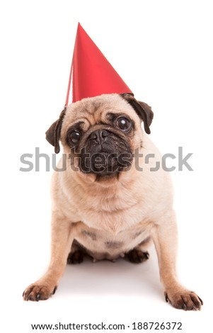Pug puppy wearing a festive hat, isolated over a white background - stock photo