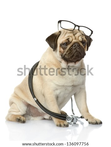 Pug puppy with a stethoscope on his neck. isolated on white background