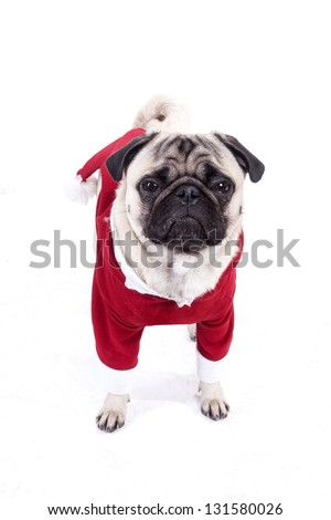 Pug wearing a Santa suit isolated on white
